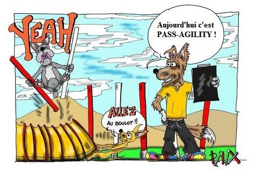 Pass-agility @ AUCHEL (62260) | AUCHEL | CLUB SAINT HUBERT DU NORD | France