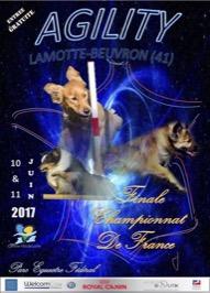 Championnat de France d'Agility 2017 @ Lamotte-Beuvron (41600)