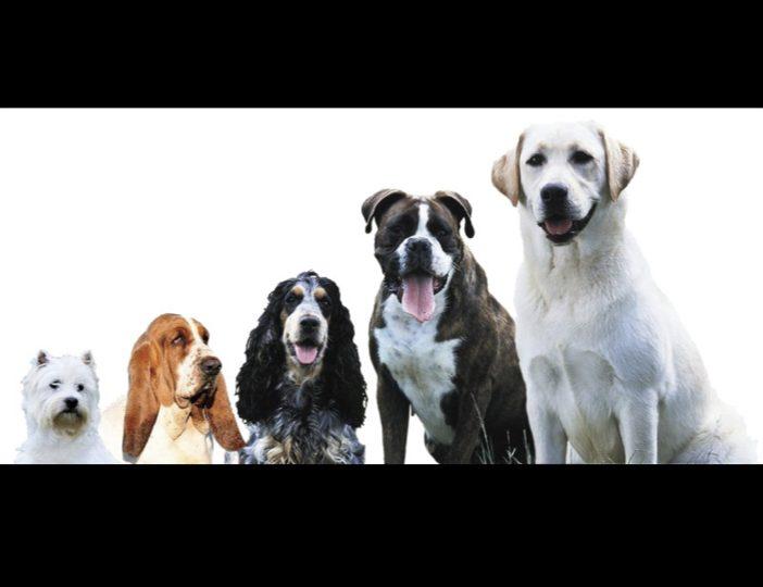 Diaporama-chiens-visiteurs-Site.025