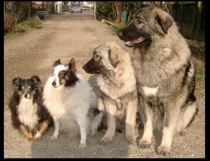Diaporama-chiens-visiteurs-Site.026